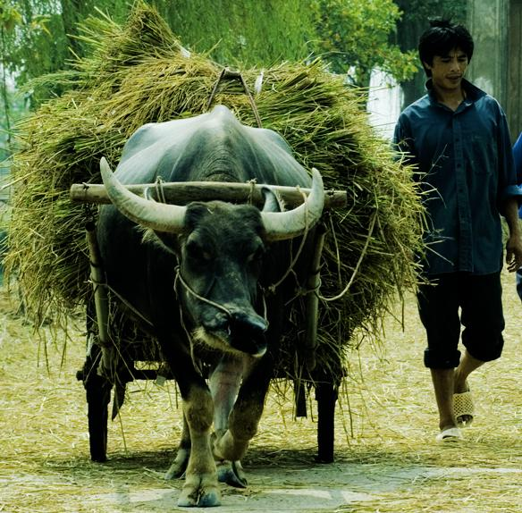 Khái quát về làng xã truyền thống vùng Đồng bằng sông Hồng